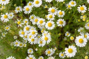Лекарственные растения и травы: если вы думаете, что все о них знаете, то сильно ошибаетесь (Фото & Видео) +Отзывы