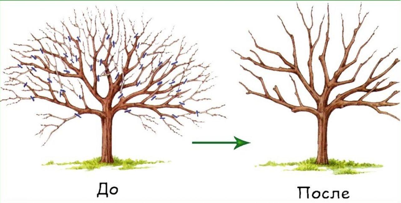 Прореживание деревьев при осенней обрезке