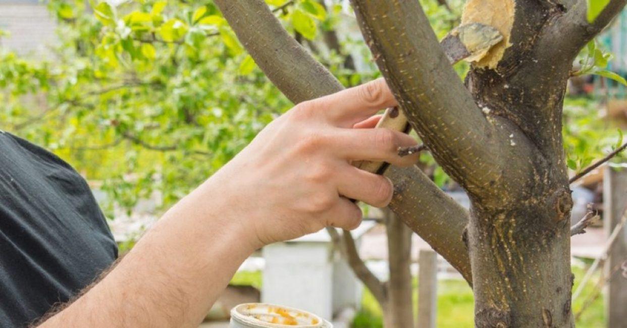Как использовать садовый вар