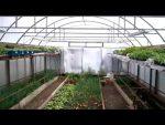 [ВИДЕО] Что обязательно нужно сделать в новой теплице перед высадкой культур