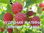 [ВИДЕО] Пасынкование винограда