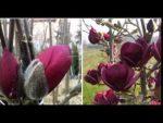 [ВИДЕО] Какие деревья посадить возле дома