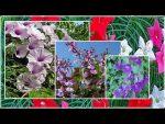 [ВИДЕО] Быстрорастущие лианы