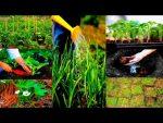 [ВИДЕО] Как не копать грядку - природное земледелие
