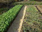 [ВИДЕО] Маленькие премудрости огородников
