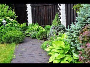[ВИДЕО] Сад начинающего цветовода