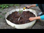 [ВИДЕО] 8 способов подкисления почвы для голубики