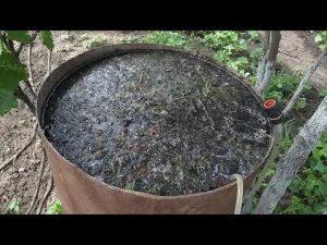 [ВИДЕО] Травяное удобрение для голубики