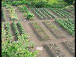 [ВИДЕО] Высокие грядки за безделицу увеличат урожай всего