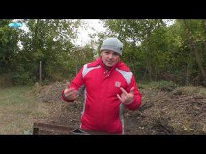 [ВИДЕО] Способ восстановить плодородие почвы осенью