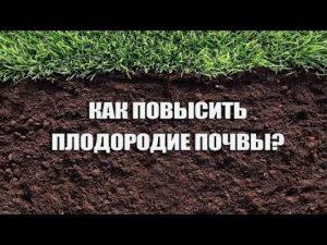 [ВИДЕО] 8 способ повысить плодородие почвы