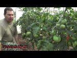 [ВИДЕО] Удивительная техника в сельском хозяйстве