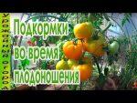 [ВИДЕО] Когда и как обрезать листья у томатов
