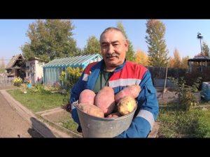 [ВИДЕО] Посадка картофеля