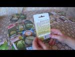 [ВИДЕО] Как вырастить капусту кольраби