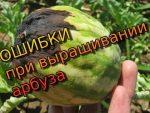 [ВИДЕО] Выращивание патиссонов