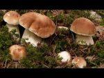 [ВИДЕО] Посадка грибов на участке или даче