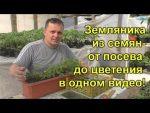 [ВИДЕО] Выращиваем вешенки дома