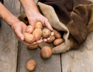 [Инструкция] Как правильно сохранить урожай картофеля: описание способов хранения (Фото & Видео) +Отзывы