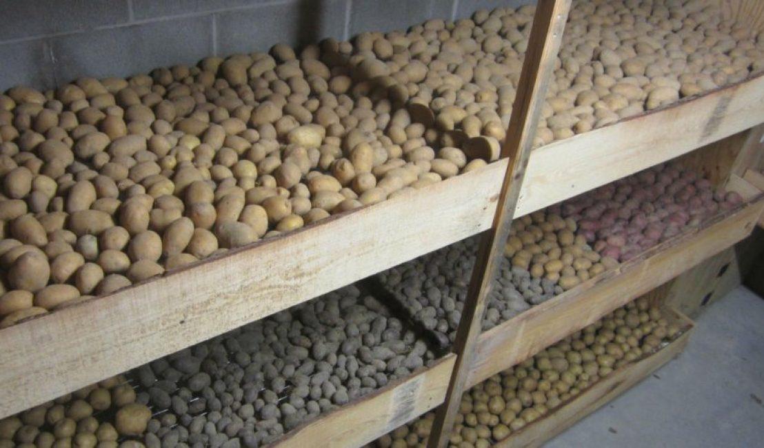 Хранение картофеля на полках