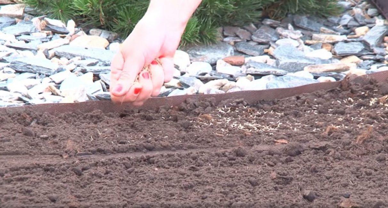Посев семян возле бордюра