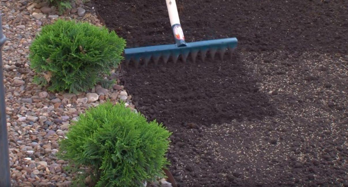 Присыпание семян землёй с помощью граблей