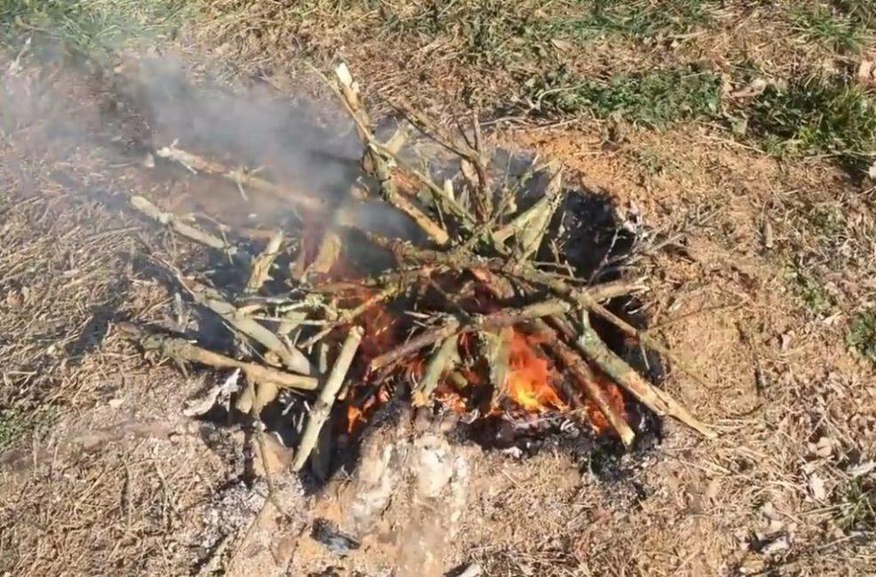Сжигание корней