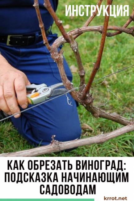 Как обрезать виноград: подсказка начинающим садоводам