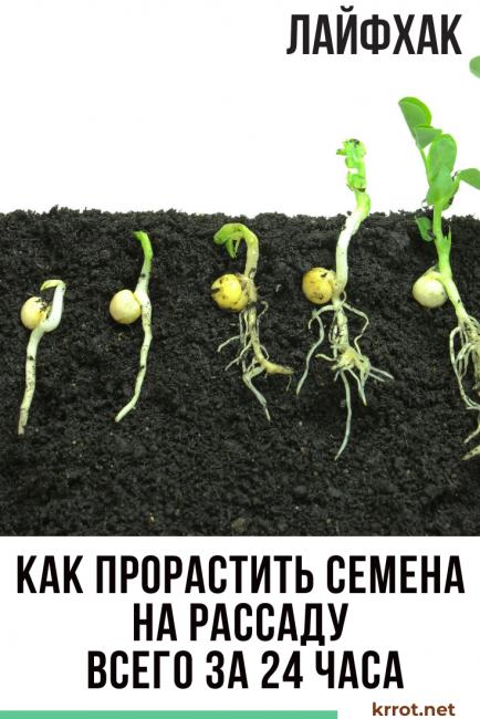 как прорастить семена на рассаду