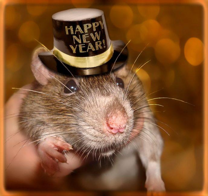 На фото хозяйка года —Крыса