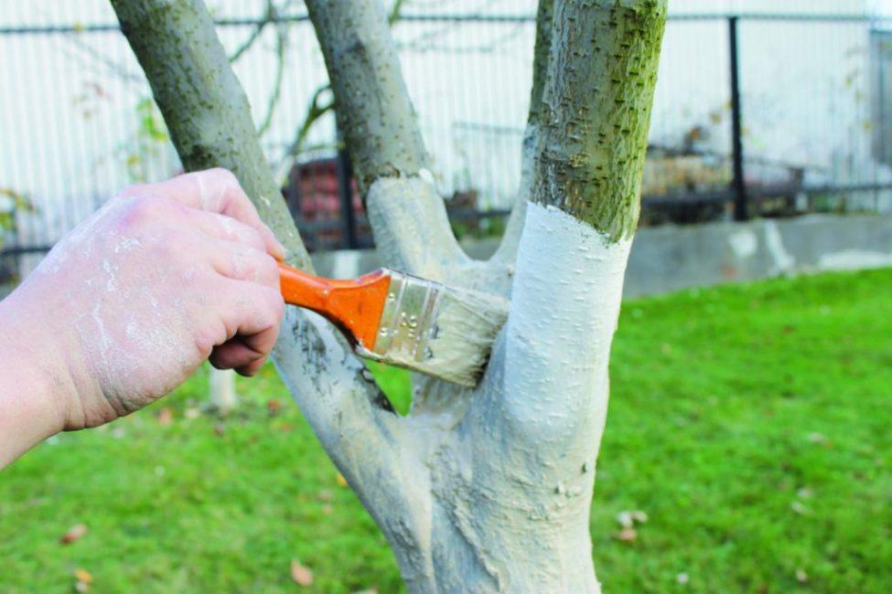 Побелка дерева плоской кистью