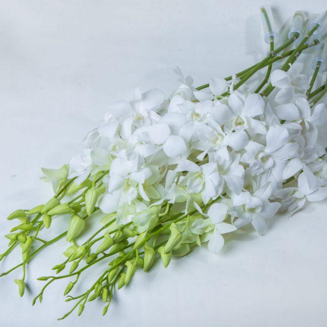 Белые цветки орхидеи