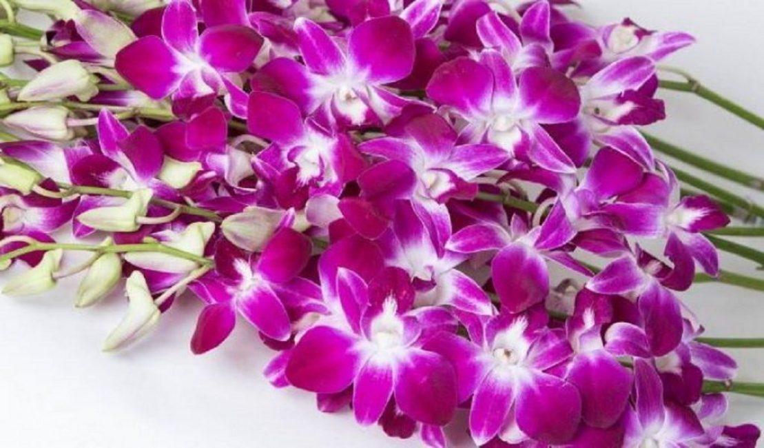 Фото орхидеи: шикарное цветение завораживает взгляд