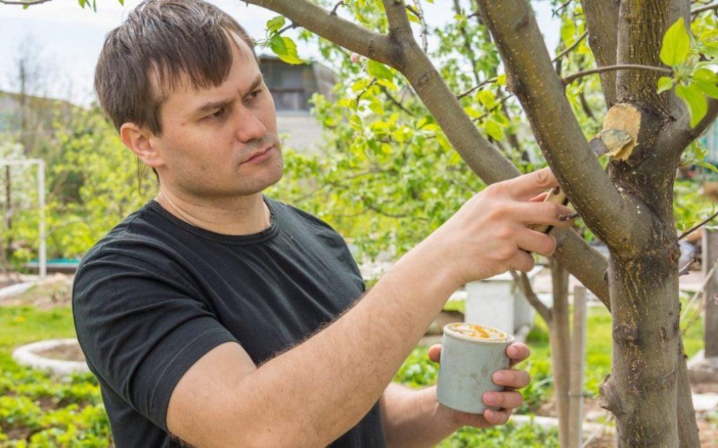 Обработка повреждённых участков дерева садовым варом