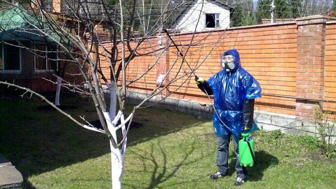Обработка яблонь от болезней и вредителей осенью