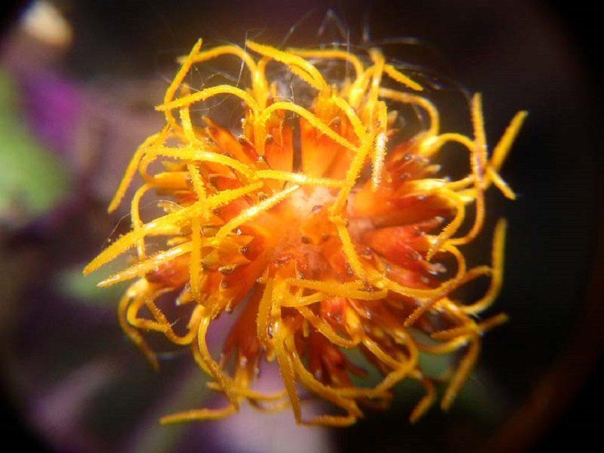 Огненный цветок экзотической синей птицы