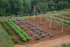 Приспособление для эффективной прополки сорняков ?