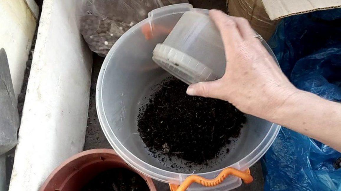 Состав грунта для адениума
