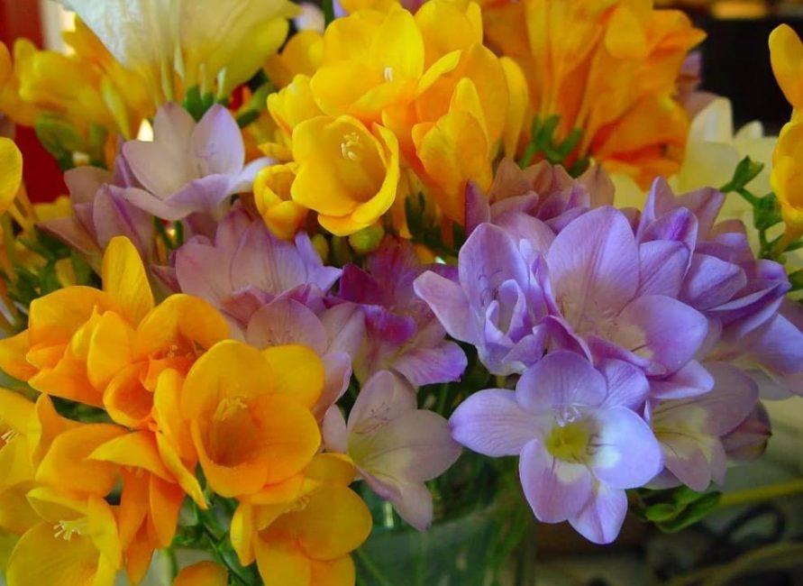 Внешний вид цветков