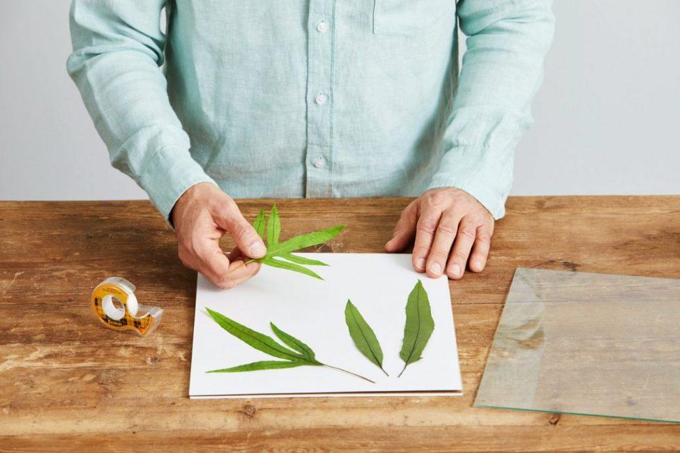 Можно разложить элементы растений в любом понравившемся порядке