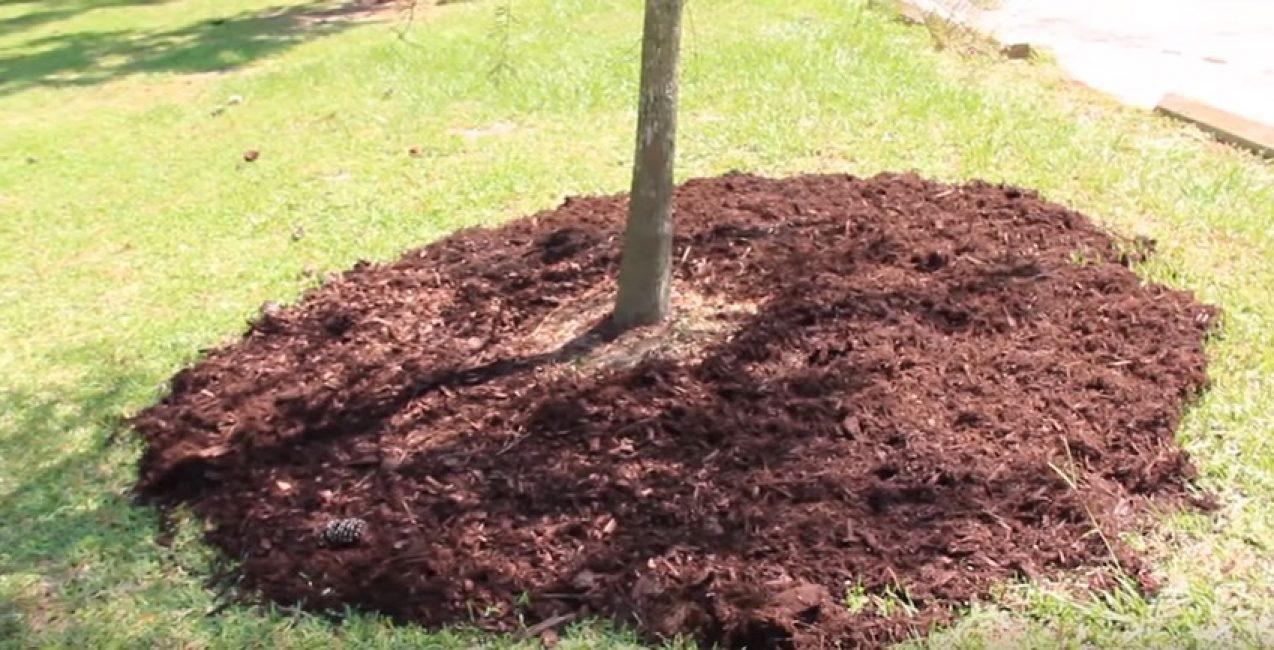 Удобрение персика органикой осенью