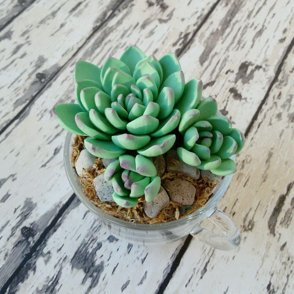 каменный цветок в горшке фото данном видео