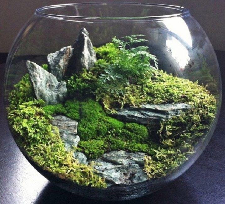 Домашний мини-сад в аквариуме для рыбок
