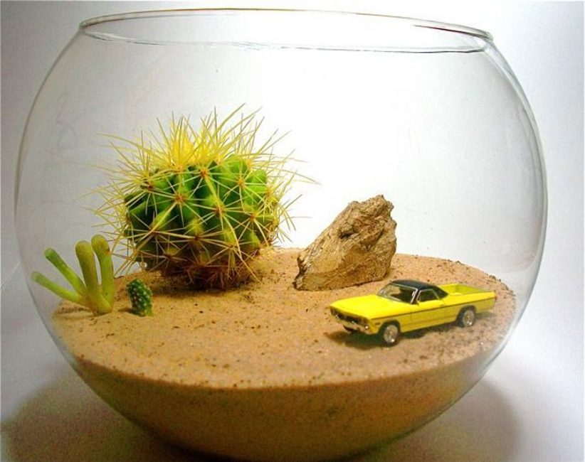 Идея флорариума «Полупустыня»