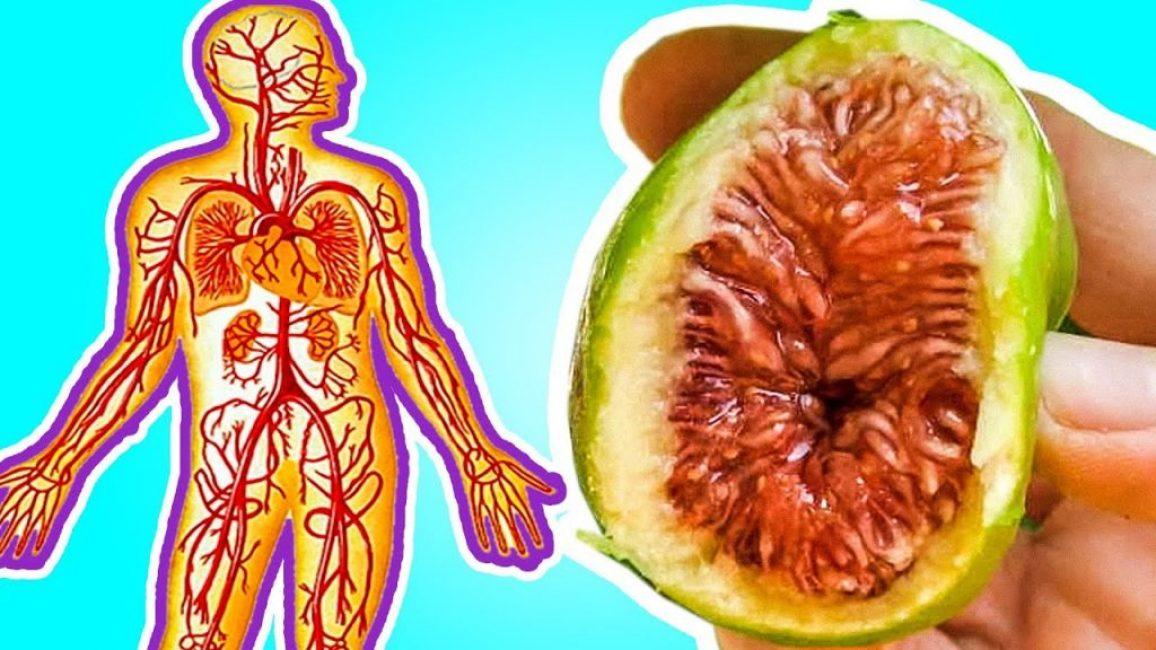 Польза инжира для жизненно-важных систем организма