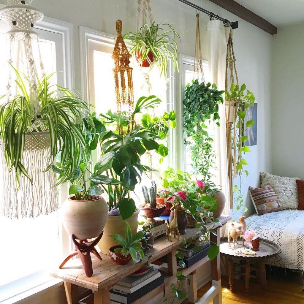 Как подобрать цветы и комнатные растения для дома — The Village