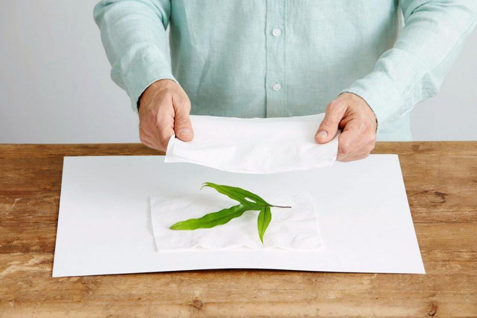 В результате воздействия утюгом лист высушивается