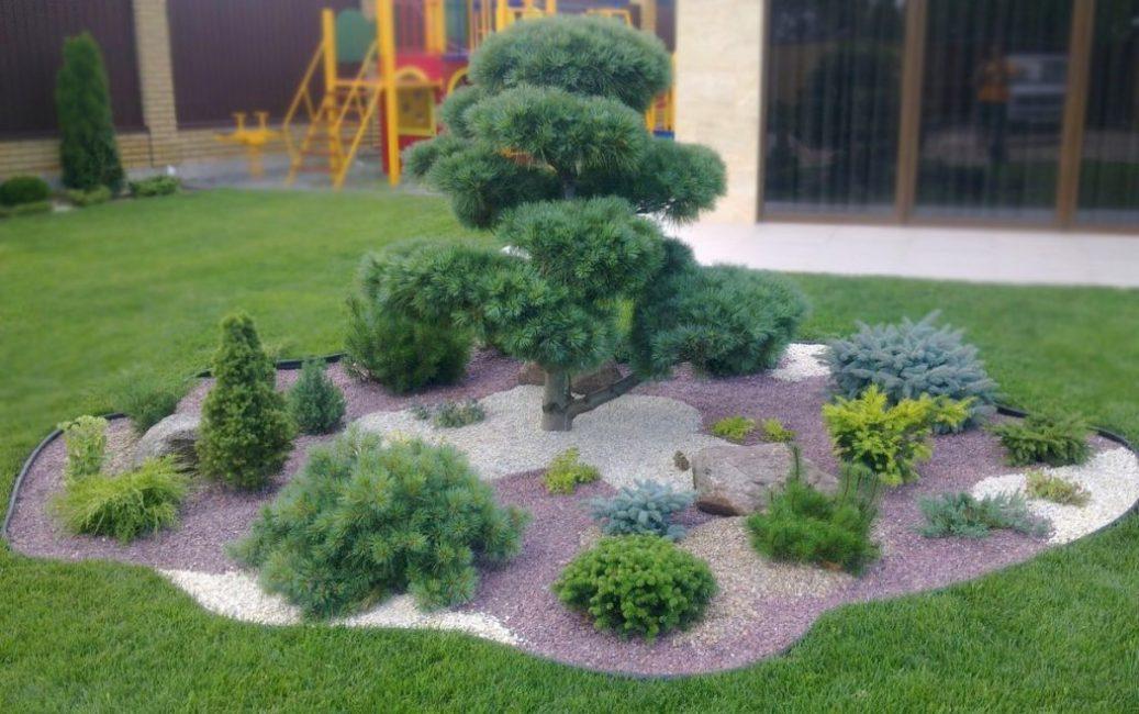 Каменный садик с хвойными растениями