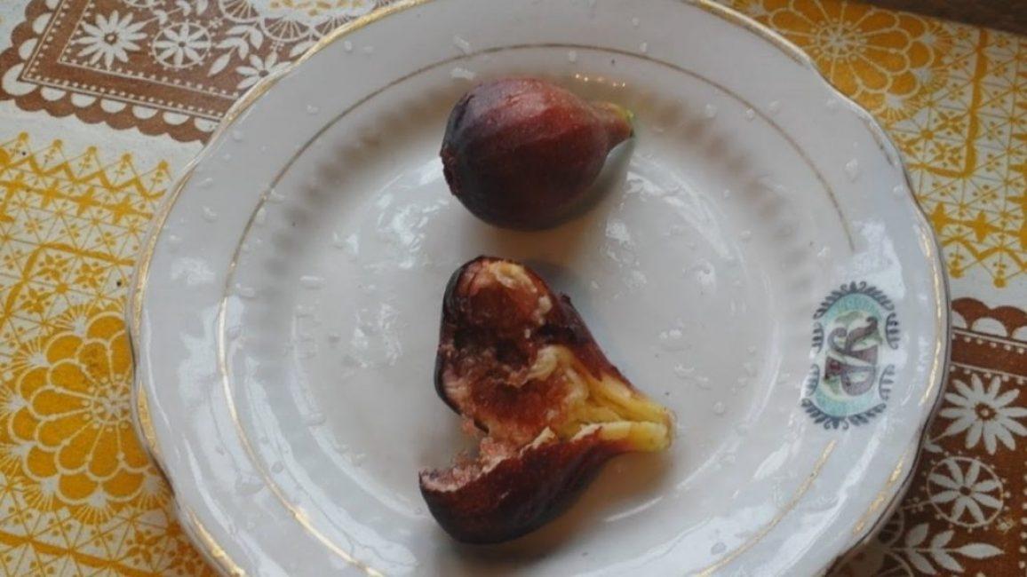 Инжир - сорт крымский черный