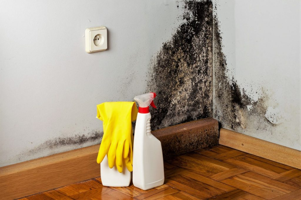 Грибок стен как избавиться в домашних условиях